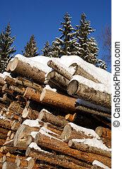 journaux bord, pile, hiver, forêt