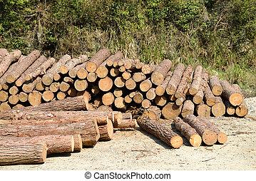 journaux bord, tas bois construction, forêt, pin