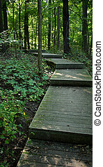 Journey, discover. - Wooden stairs in woods.