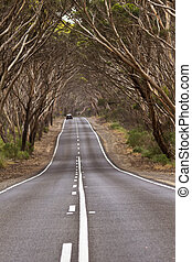 Road dips beneath am arching canopy of trees creating an ongoing journey image. Location is Kangaroo Island, South Australia.