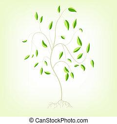 jovem, árvore, com, raizes