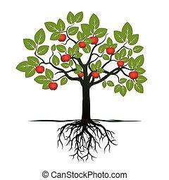 jovem, árvore, com, verde, folheia, raizes, e, vermelho, apples., vetorial, illustration.