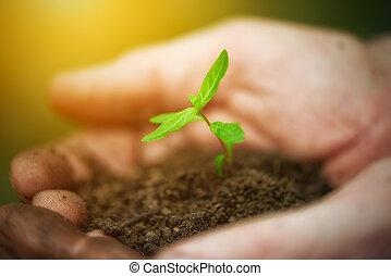jovem, broto, plantas, em, antigas, mãos sujas, conceito