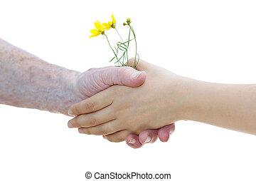 jovem, e, mulheres sêniors, segurando, amarelo floresce