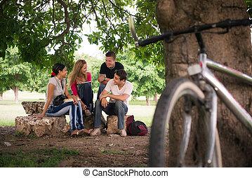 jovem, estudantes, fazendo, dever casa, em, faculdade, parque