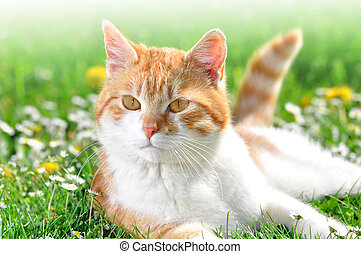 jovem, gato