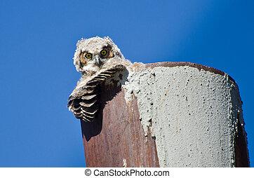 jovem, owlet, fazer, contato olho