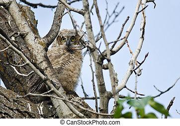 jovem, owlet, fazer, direto, contato olho, com, tu