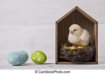jovem, páscoa, galinha, em, lar, páscoa, conceito