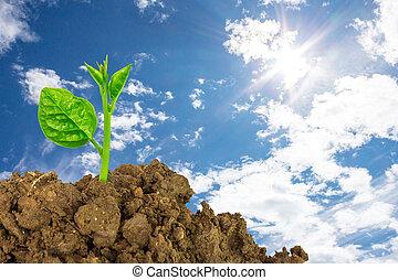 jovem, planta verde, de, solo