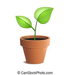 jovem, planta verde, em, pote, isolado, ligado, a, branca,...