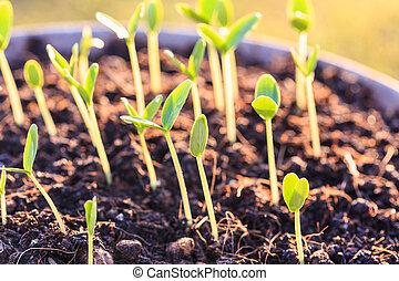 jovem, planta verde, em, solo