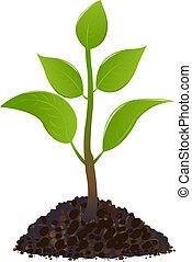 jovem, planta verde