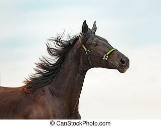 jovem, purebred, cavalo, retrato