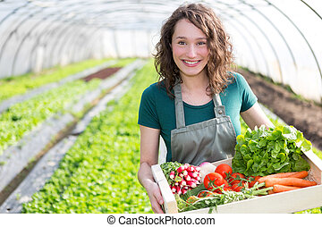 joven, atractivo, mujer, cosechar, vegetal, en, un, invernadero