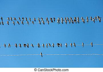 joven, golondrinas, en, el, alambres, contra, el, cielo azul