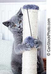 joven, lindo, gato, rasguño, el suyo, garras, en, un, scratcher.