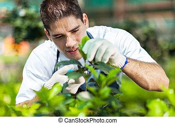 joven, macho, jardinero, trabajando