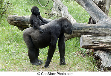 joven, mono, en, madres, espalda