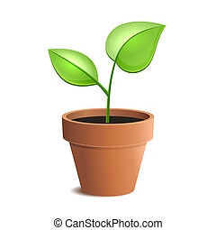 joven, planta verde, en, olla, aislado, en, el, blanco,...