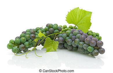 joven, racimos, de, uvas, con, hojas, blanco, plano de fondo