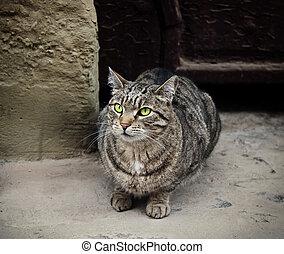 joven, sin hogar, gato