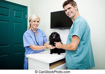 joven, veterinario, doctors, examinar, un, perro