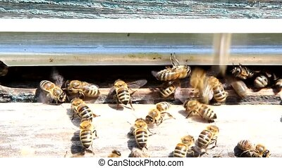 Movement of the wings bees create directional airflow. So they cool the hive.