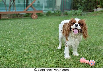 joyeux, chien, jouer