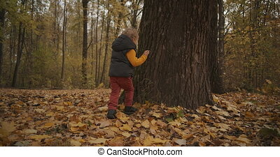 joyful boy is running in forest at autumn day, playing and rejoicing, touching old tree, fun and joy of little child at nature