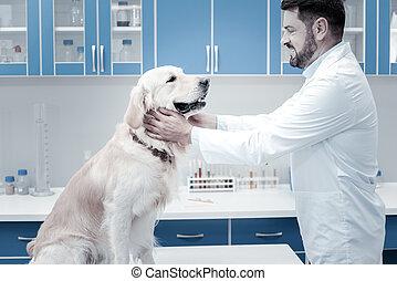 Joyful positive veterinarian looking at the dog