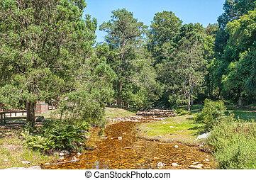 Jubilee Creek picnic spot