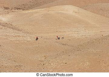 judea, 砂漠, bedouins