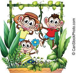 juego, monos, tres