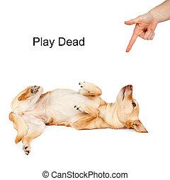 juego, muerto, comando, entrenamiento del perro