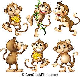 juguetón, salvaje, monos