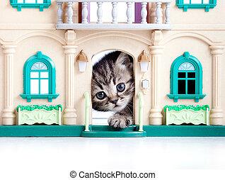 juguete, puerta, casa, mirar, gatito, afuera