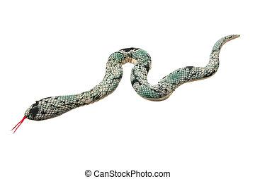juguete, serpiente