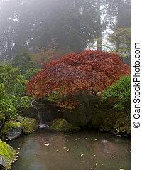 juharfa fa, felett, vízesés, -ban, japanese kert