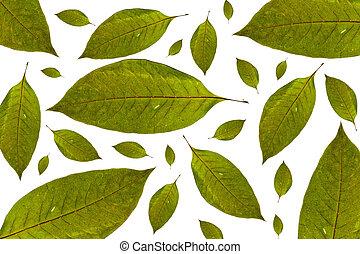 juharfa leaves, háttér