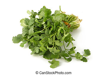 Juicy fragrant coriander. Irreplaceable seasoning for preparation of meal in east style and taste
