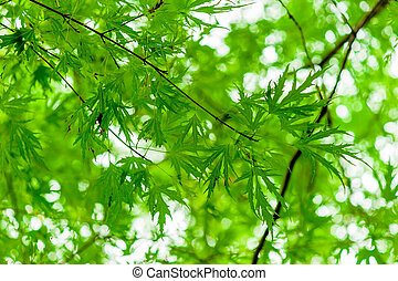 juicy green branch with young leaves in the spring