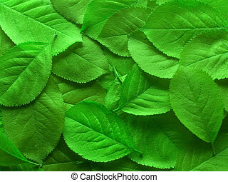 Juicy green leafs - Close-up of juicy green leafs for a...