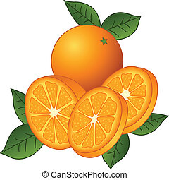 Image representing a juicy oranges, isolated on white, vector design.