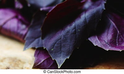 Juicy red Basil leaves. - Bright juicy leaves of red Basil....