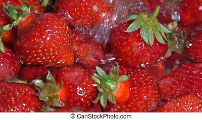 Juicy ripe strawberries washed with water. Close-up