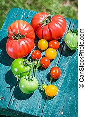 Juicy tomatoes in garden