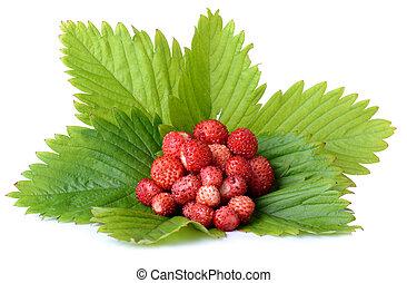 wild strawberrys