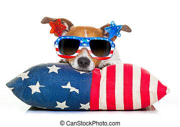 juillet, indépendance, quatrième, chien, jour