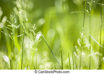 juin, fleurir, herbe, vert